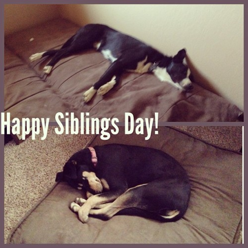 Happy Siblings Day! #maddie #rollo #siblingsday