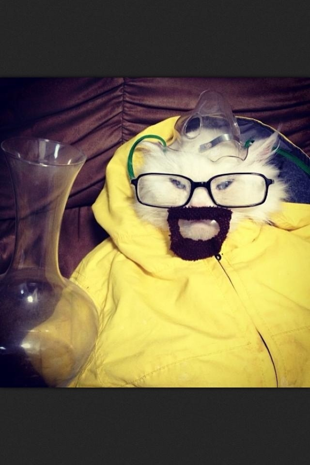 breaking bad kitty