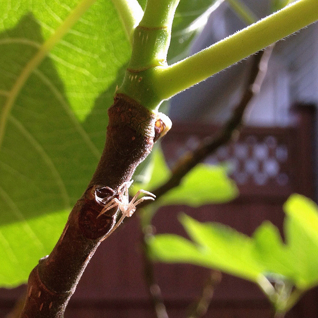 P365x52-135: Spider on Flickr.