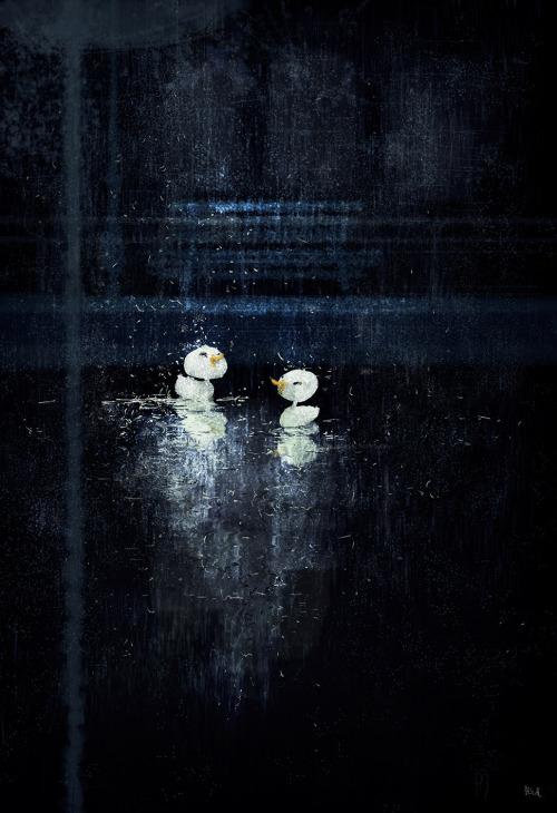 pascalcampion:  Happy like two ducks in the rain.#pascalcampionart
