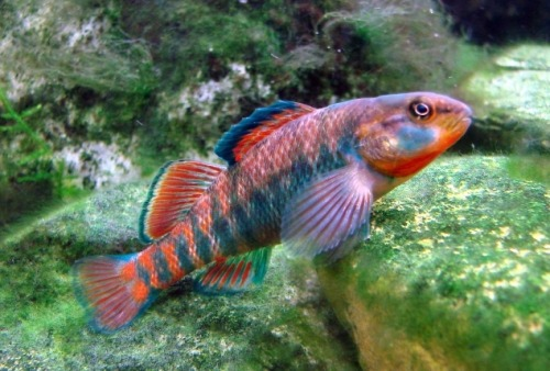 aquatictimes: