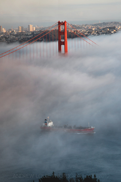 llbwwb:  Foggy Golden Gate Bridge (Day 8) (by Andrew Louie Photography)