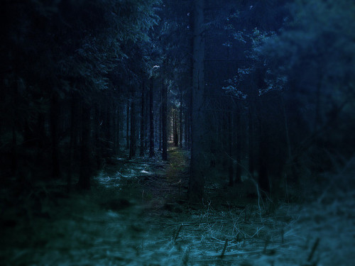 intercises:  dark forest by oskaline on Flickr.