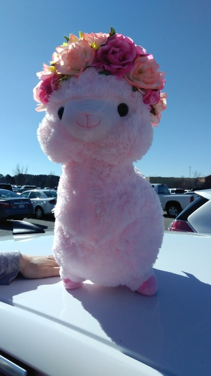 llama llama with flowers flowers flower crown headband pink pink llama cute cute animals love valentines heart stuffed animals plushie