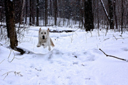 Leaping in a Winter Wonderland on Flickr.