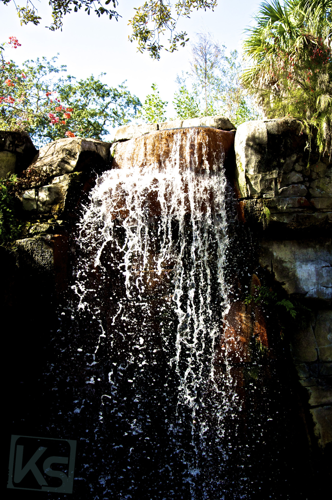 Waterfall IV - Lowry Park Zoo