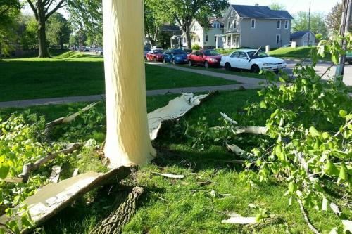 Lightning last night blew the bark off this tree. - Imgur