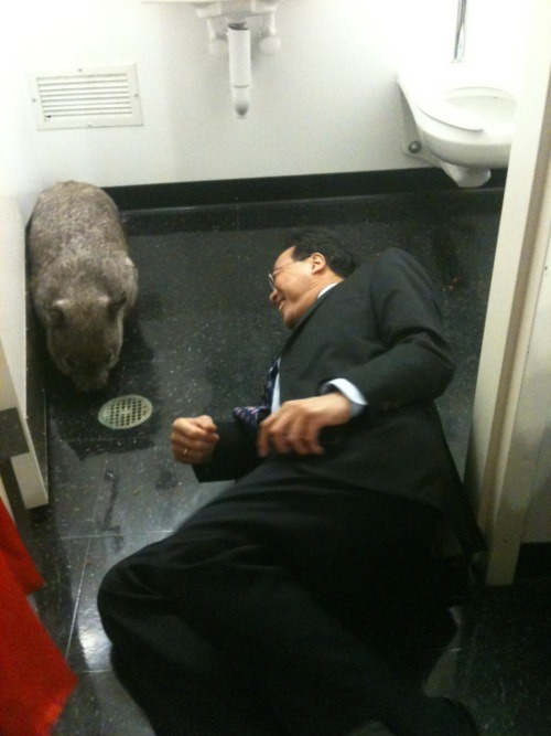 Enjoy this picture of Yo Yo Ma in a bathroom with a wombat. Because YOU DESERVE NICE THINGS.