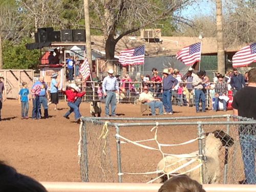 We ended up at a little local rodeo that reminded me of living in Utah. We stopped in the petting zoo where the kids and I were all terrified of everything from baby rabbits to a giant turkey. We petted the desert tortoise because it was safe.