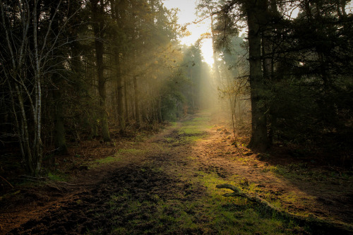 unwrittennature:  Deeper Into The Forgotten Forest_7758 (by FoxyPhoto2012)