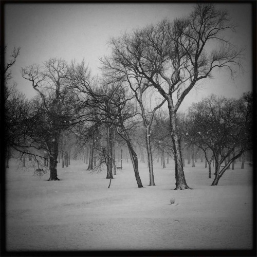 """Snow Storm""   For your daily dose of Hipstamatic this image of a snow storm in progress at Island Park in downtown Fargo, North Dakota. Hipstmatic 261, John S lens, Super Black Grain Film, no flash"