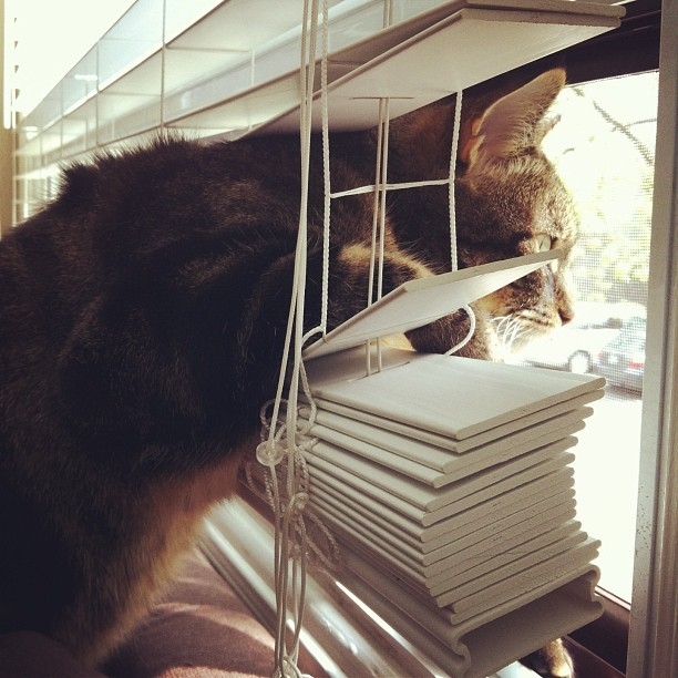 I'm in your blinds looking out your window. #cat