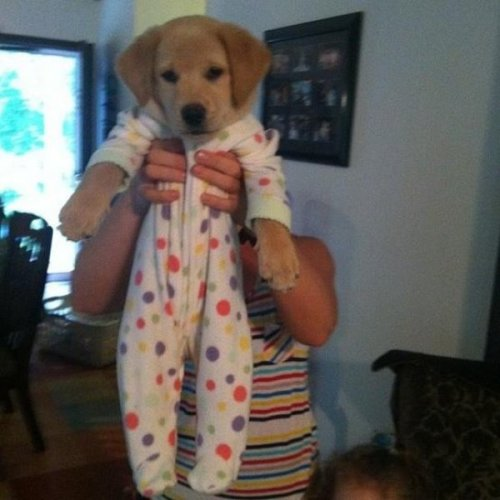 Just a Puppy in a Onesie to Help You Get Over Hump Day Sadness, meet Antidote. Antidote, meet…wait where did Sadness go?