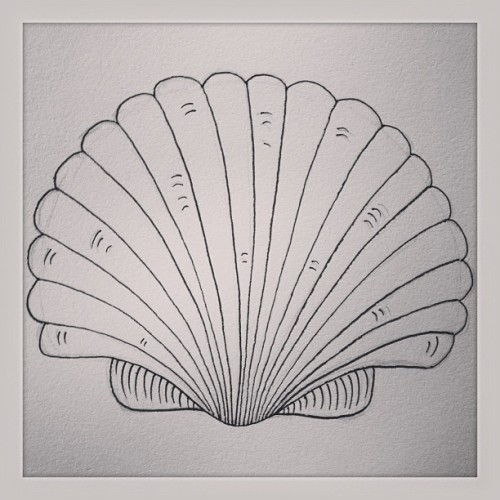Scallop Shell  #drawing #illustration