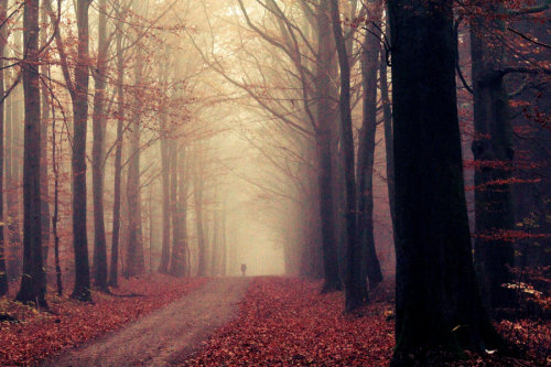 ominousplaces:  Fog in the forest, by SophiaIWS.