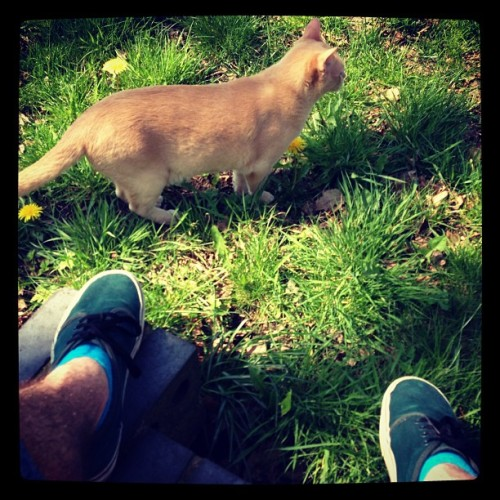 sadboypro:  Cats are the best #cat #kitty #pussy #burmese #cream #sunny #sun