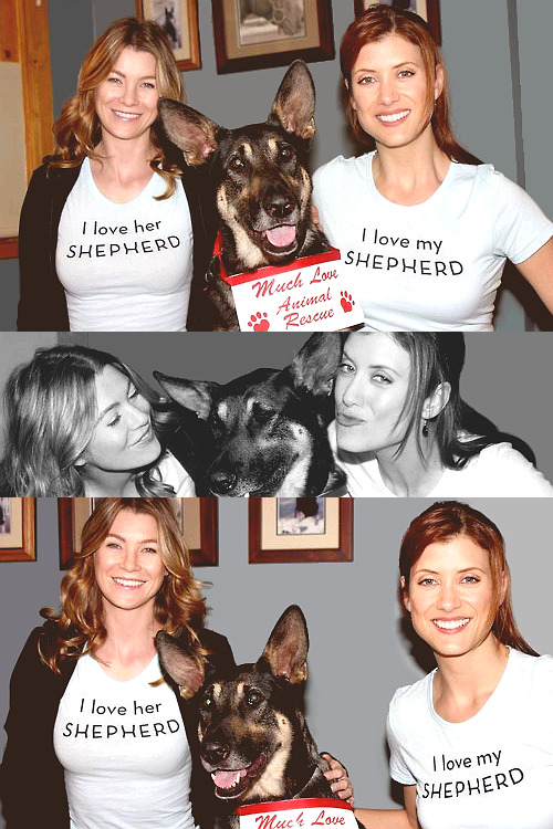 Kate Walsh x Ellen Pompeo - Animal Rescue [2005]