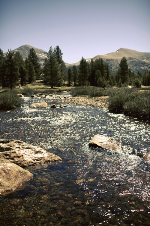 a-nice-change:  nesola: Tuolumne Meadows (by Kyle D Adams)