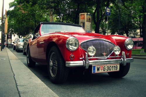 carpr0n:  Optimist Starring: Austin-Healey 100 (by Andrey Baydak)