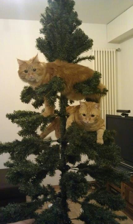 I better come home to a recreation of this with my cats one day this Christmas season.