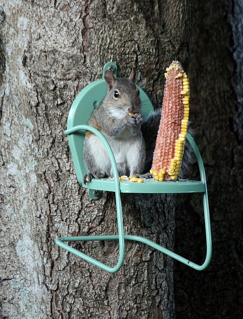 Top 5 Squirrel Chairs