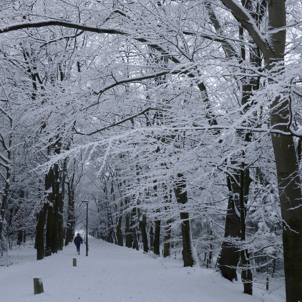 Running in the winter wonderland of Lochem (by B℮n) Netherlands