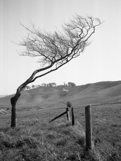 hideback:  Niall Oswald: adventuresinfilm:  Windswept, Cherhill Down. on Flickr.