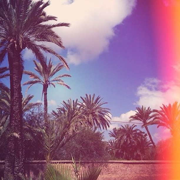 Palm trees #marrakech #palmeraie #bakchic #inspiration