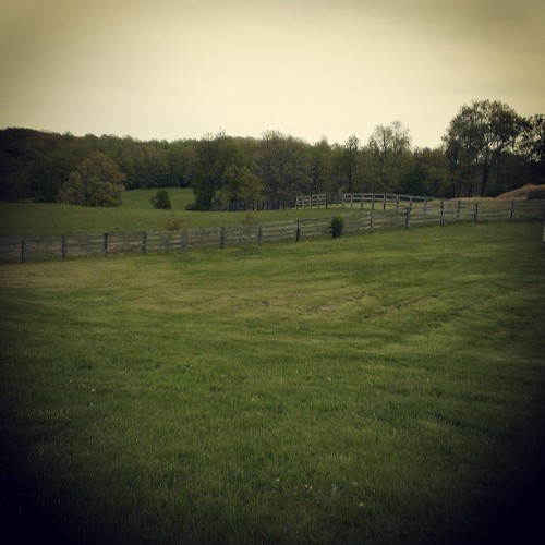 WAG is so pretty #horseshow #fields