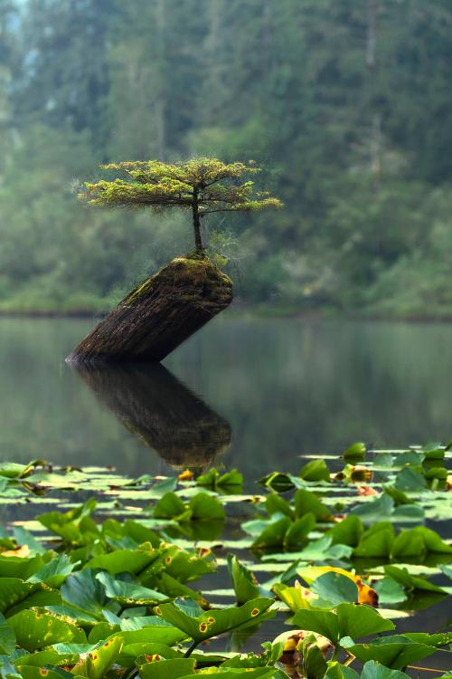 The Fairytale Tree by: Thomas Dawson