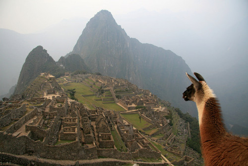 overlooking machu picchu (source)