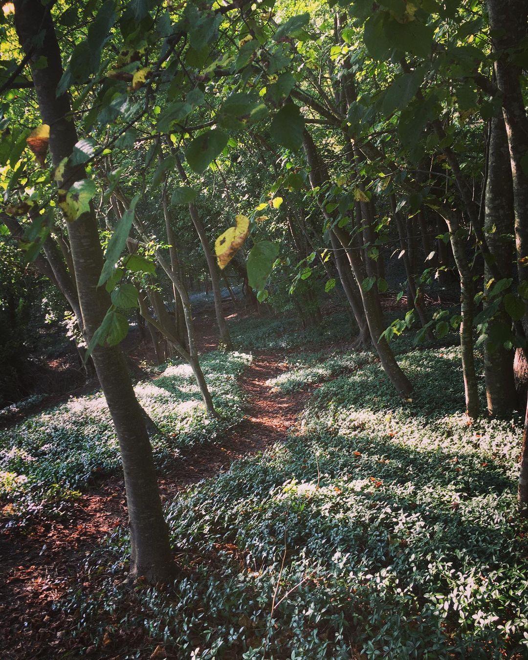 Jardin anglais du château de la Roche Guyon #patrimoine #jardinhistorique #jardinanglais #bois #nature #naturelovers #naturephotography (à Château de La Roche-Guyon)https://www.instagram.com/p/CUSbxkLsMqL/?utm_medium=tumblr