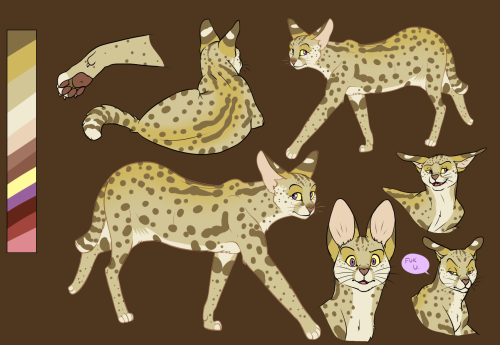 felis-serval:  Serval 1 Reference Sheet by Knon