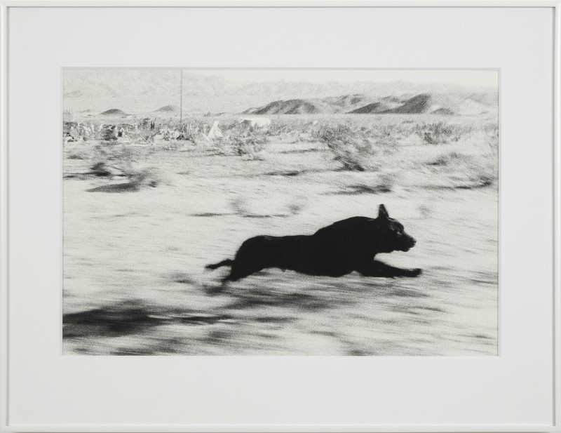 andrewharlow:  John Divola, Dogs Chasing My Car in the Desert / D01F07 -B, 1996-1998 — via Contemporary Art Daily