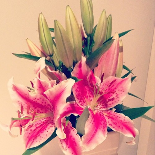 My favourite type of flowers. Lillies! They look gorgeous and smell divine. My room wouldn't be complete without a gorgeous set of pretty flowers.  #flowers #lillies #pink #colours #ingrammers #instafilter #igdaily
