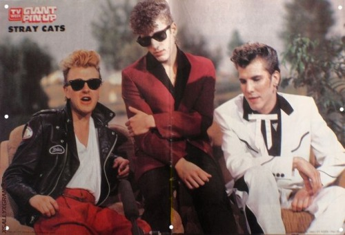 "♫""'STRAY CATS TV WEEK GIANT PIN-UP POSTER NOV 1983 , Festival Loreley in 1983 in interview  …☺""'♫"