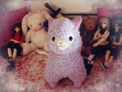 My Alpaca Milka and some of his new friends (ノ◕ヮ◕)ノ*:・゚✧*:・゚✧