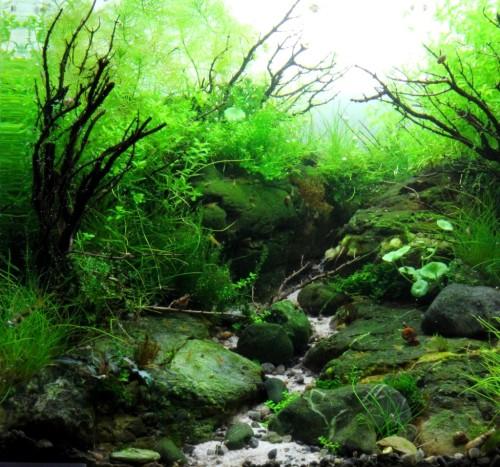 """Résultats du CAPA 2013 (Concours Aquagora de Paysages Aquatiques).La Team FACT a obtenu de bons résultats !- Catégorie aquarium de -70LSwee - """"Thym Thym Thym"""" - rank 3- Catégorie aquarium de +70L à 250LCeed - """"Refuge"""" - rank 1 + Choix du public + Aquagora dorVoultou - """"La Colère Du Démon"""" - rank 3- Catégorie aquarium de +250LSwee - """"Soulaterre"""" - rank 2Greg C - """"The Lost Path"""" - rank 3Un grand bravo à toute léquipe !!"""