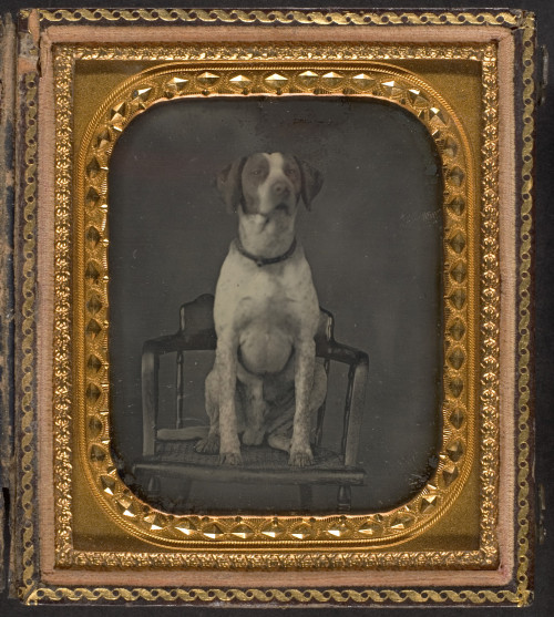 ca. 1855, [daguerreotype portrait of a dog seated posed in a chair], Rufus Anson via the Metropolitan Museum of Art, Photography Collection