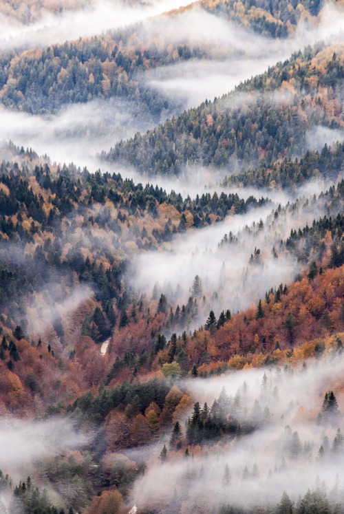 wandering-through-nature:   senerii: Irati Wood (By Manuel Subirats)