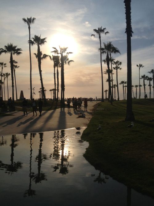Venice beach, California 🌞