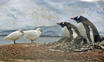 Two against two, Jougla Point, Antarctica by _Zinni_ (away, back mid May) on Flickr.
