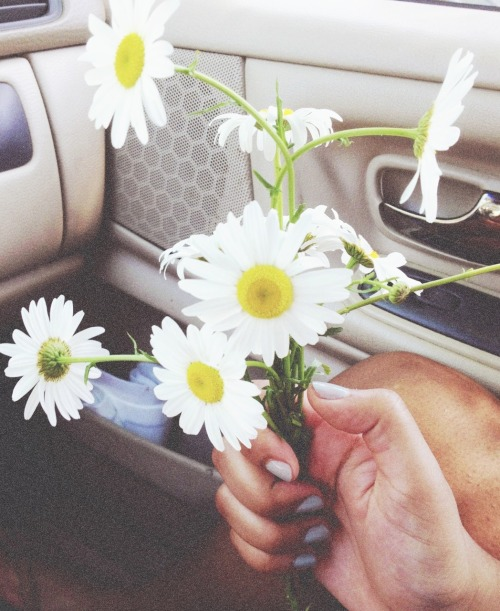 yungdelaney:  pretty weeds