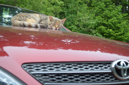 kitty sleeping on my car