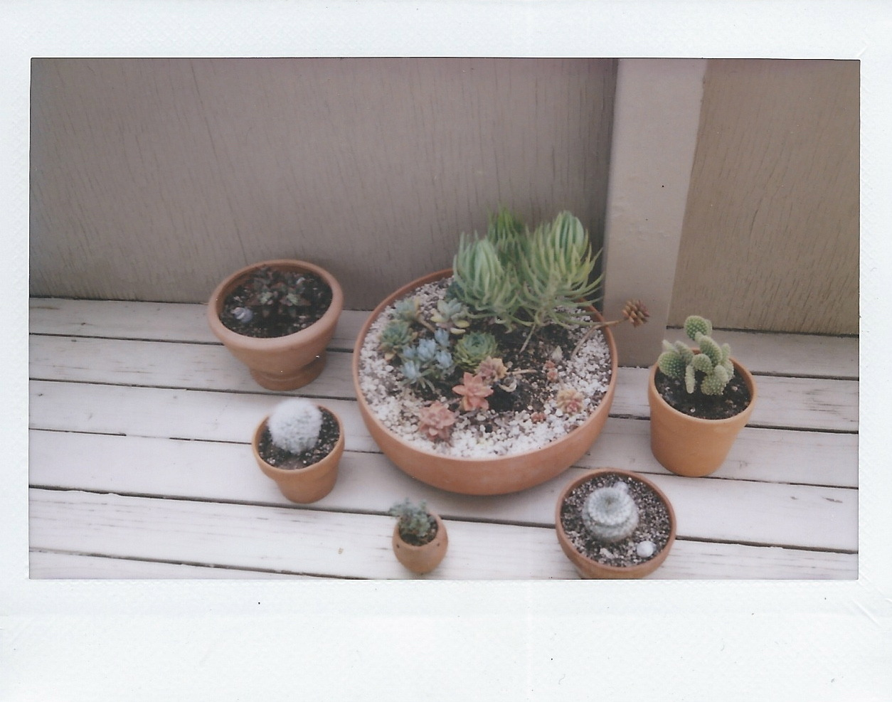 polaroid of succulent garden i am a white girl