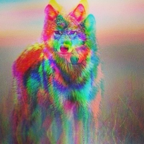 3d Tumblr Pictures 3d Wolf Tumblr Hipster 3d Wol