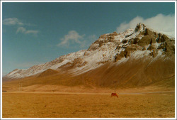 Icelandic horse by the foot of a mountain, somewhere outside of Reykjavik.
