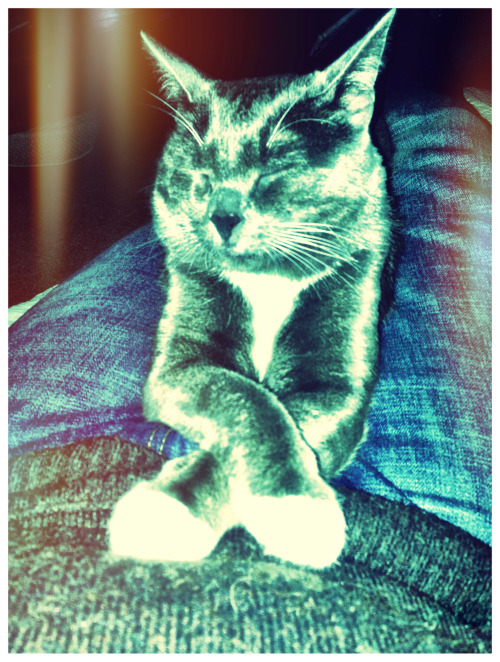 The daily kitty is one cool cat. #cameraplus
