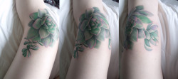 fuckyeahtattoos:  Knee Cap Succulents done by Rob Chamers at Ink Spot in Ottawa, Canada.