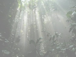 in the jungle, the jungle even controls how much sun is aloud in